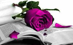 Poesía y Condición Humana